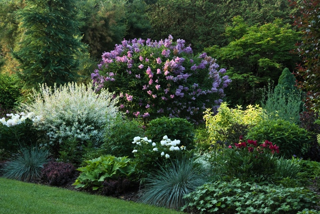 Perennial Gardens 2015 on perennial garden plans zone 7, cottage gardens landscape design, perennial shade garden design, perennial garden layout design, perennial bulb garden design, perennial flower garden design plans, perennial garden plans zone 5, perennial garden plants,
