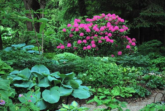 Shade Garden Design Plans